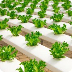 6_hydroponics_square_white